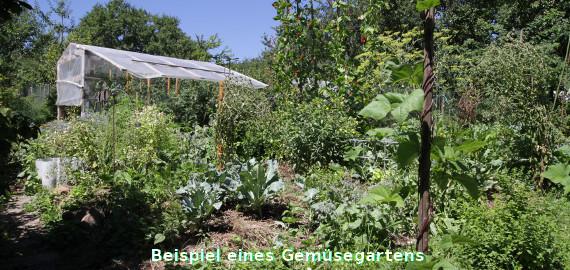 Beispiel eines Gemüsegartens